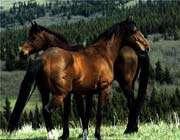 красивые лошады