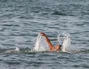 8کلید طلایی برای شنا در دریا