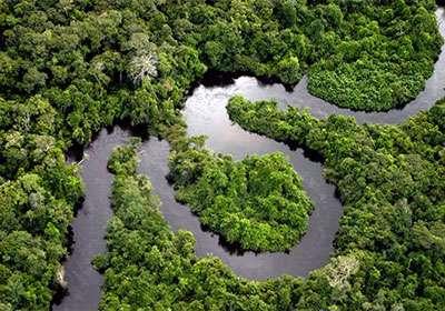 10 جنگل زیبای جهان