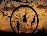 چرخه زندگی