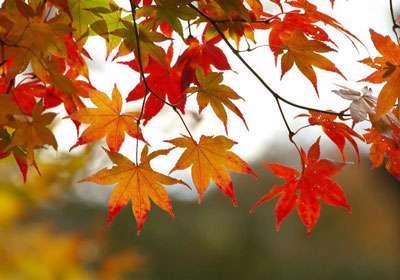 انشا پاییز از زبان یک برگ