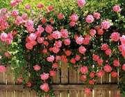 flowers020