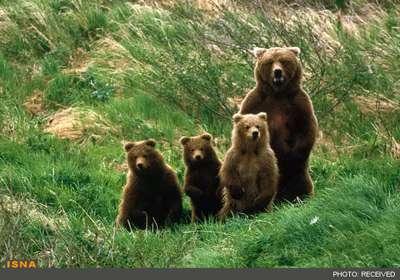 دره خرس