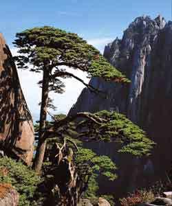 کوهستان زرد چین