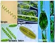 اهمیت و کاربرد جلبک ها در زندگی بشر