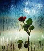 الزهرة