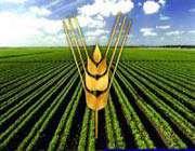 iran buğday üreten ülkeler sıralamasında 11.