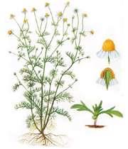 گیاه چیست؟
