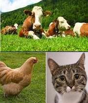 حیوانات و بیماری