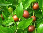 şifalı bitkilerin faydaları