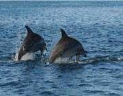 ڈولفن مچھلی کی حیرت انگیز یادداشت