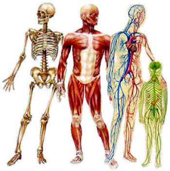 Image result for سیستم عصبی بدن