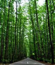 غابة كيسوم في جيلان