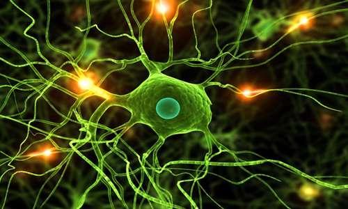 Image result for نورونهای آینه ای