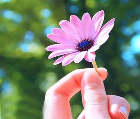نتیجه تصویری برای زیباترین برگ های گل ها