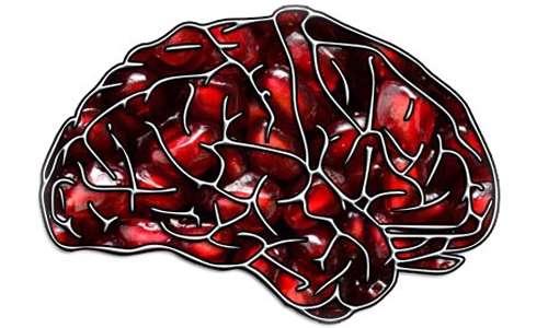 انار و مغز