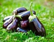 баклажан - плодом долголетия.