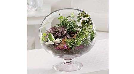 تولید شوینده طبیعی از تراریوم گیاه آلوئه ورا