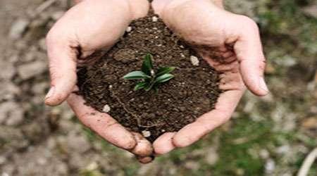 خاک زندگی بخش