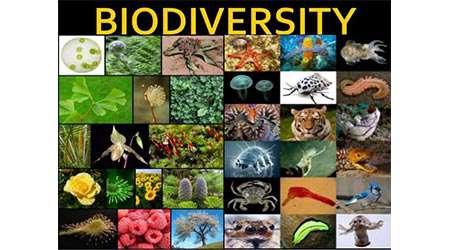 بررسی تنوع زیستی در محل زندگی انسان