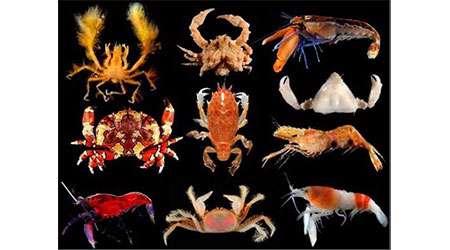 محیط زندگی جانوران مختلف