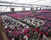 готова поставлять на российский рынок фрукты и цветы в объеме 500 тысяч тонн товаров в год.