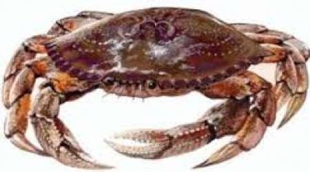 خرچنگ