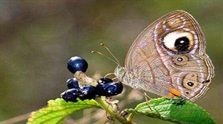 kelebeklerin kaç gözü vardır?