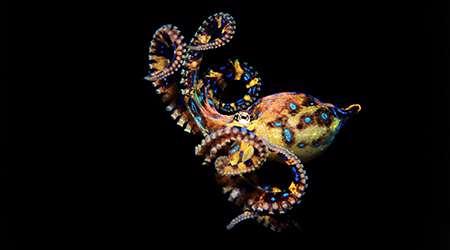 سمی ترین جانداران جهان- بخش اول