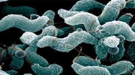 یافتن آنتی بیوتیك های مناسب برای انواع باکتری های بدن، جلسه ششم