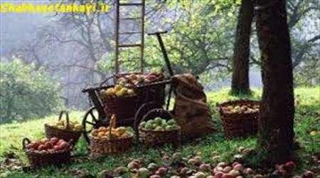 میوه ، حلال،باغ