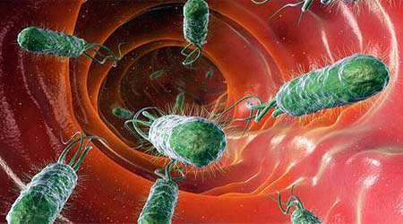 یافتن آنتی بیوتیك های مناسب برای انواع باکتری های بدن، جلسه دوم