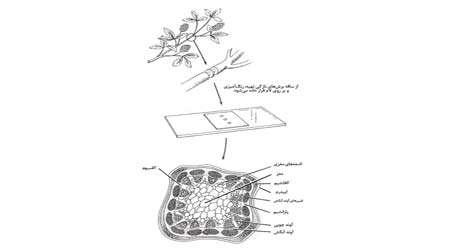 مشاهده میكروسكوپی سلول های گیاهی و جانوری، جلسه اول