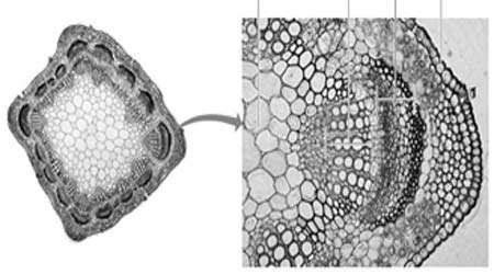 مشاهده میکروسکوپی سلول های گیاهی و جانوری، جلسه دوم