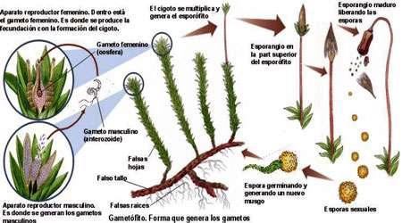 بررسی انواع گیاهان (3)