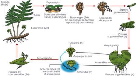 ژنتیک در گیاهان (1)
