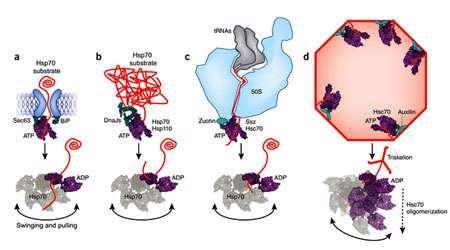 تا شدن پروتئین ها (3)