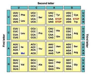 کد ژنتیک (1)