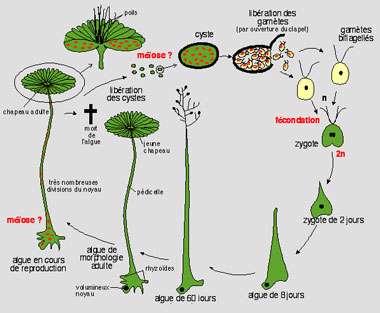 ژنتیک در گیاهان (2)
