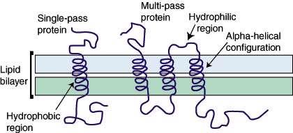 پروتئین های غشایی (1)