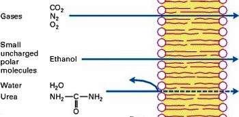 پروتئین های انتقال غشایی (2)