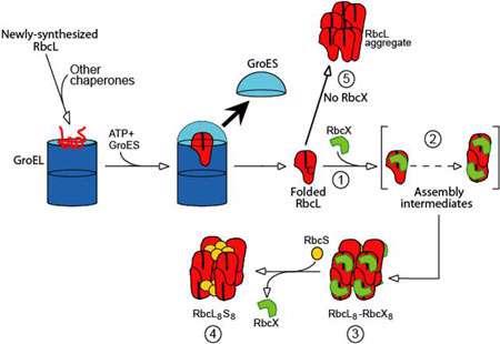 تا شدن پروتئین ها (2)