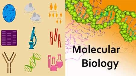 زیست شناسی مولکولی (بخش دوم)