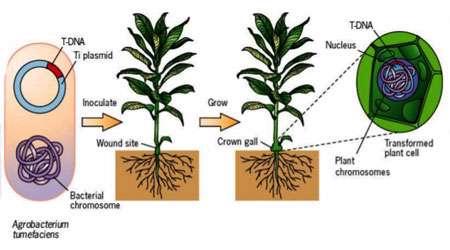 ژنتیک خزه گیاه