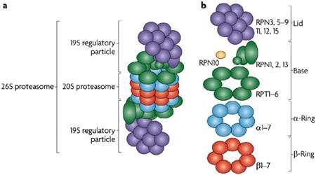 تجزیه پروتئین ها (1)