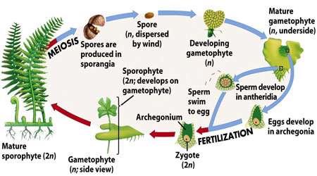 ژنتیک در نهان دانگان