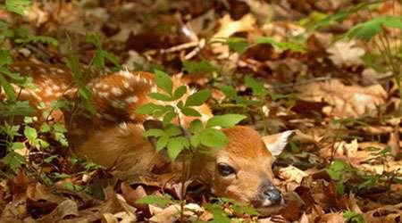پنهان شدن جانوران در جنگل- قسمت اول