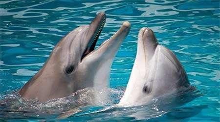 درک زبان دلفین با کمک هوش مصنوعی