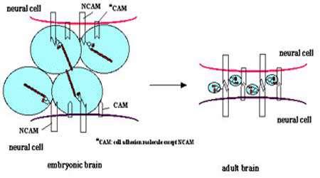اتصالات سلولی (بخش دوم)