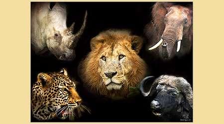 عجایبی در مورد جانداران